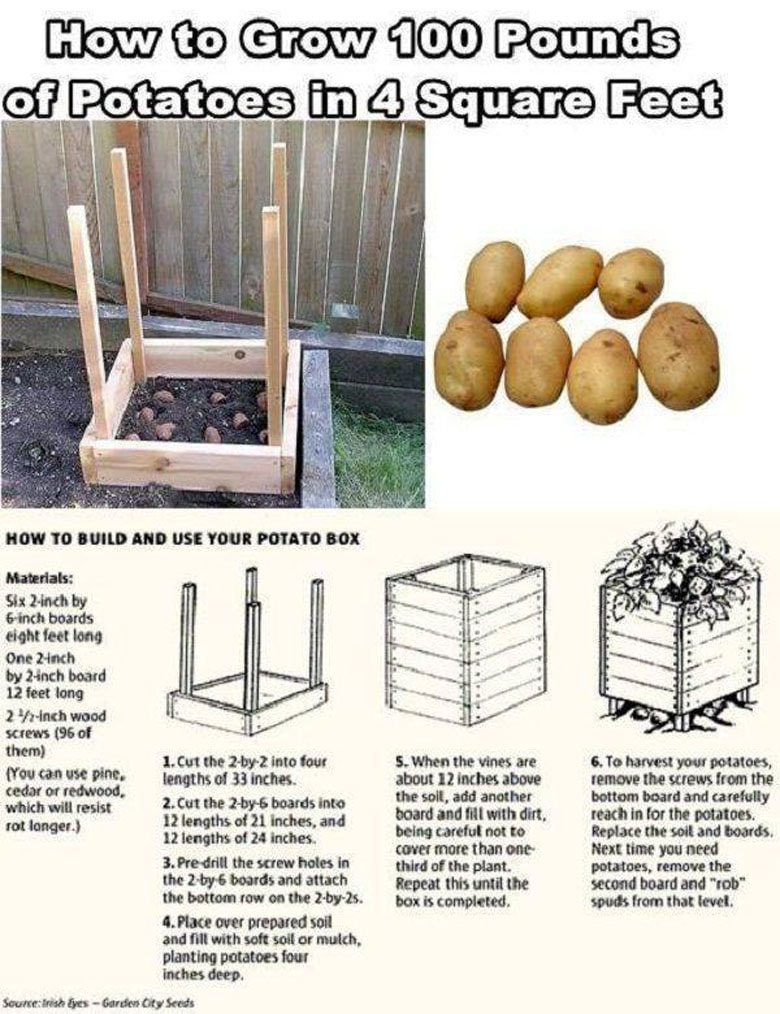 grow 100 lbs of potatoes in 4 square feet