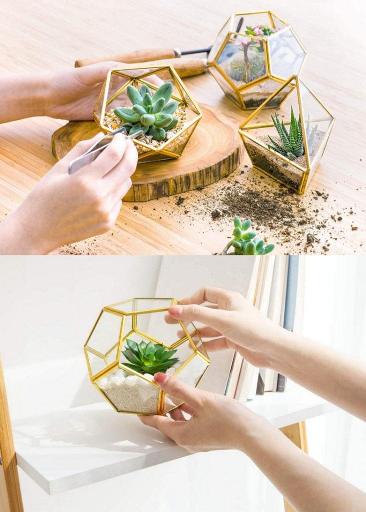 Idées cadeaux de jardin intérieur pour maman qui aime les plantes et les succulentes