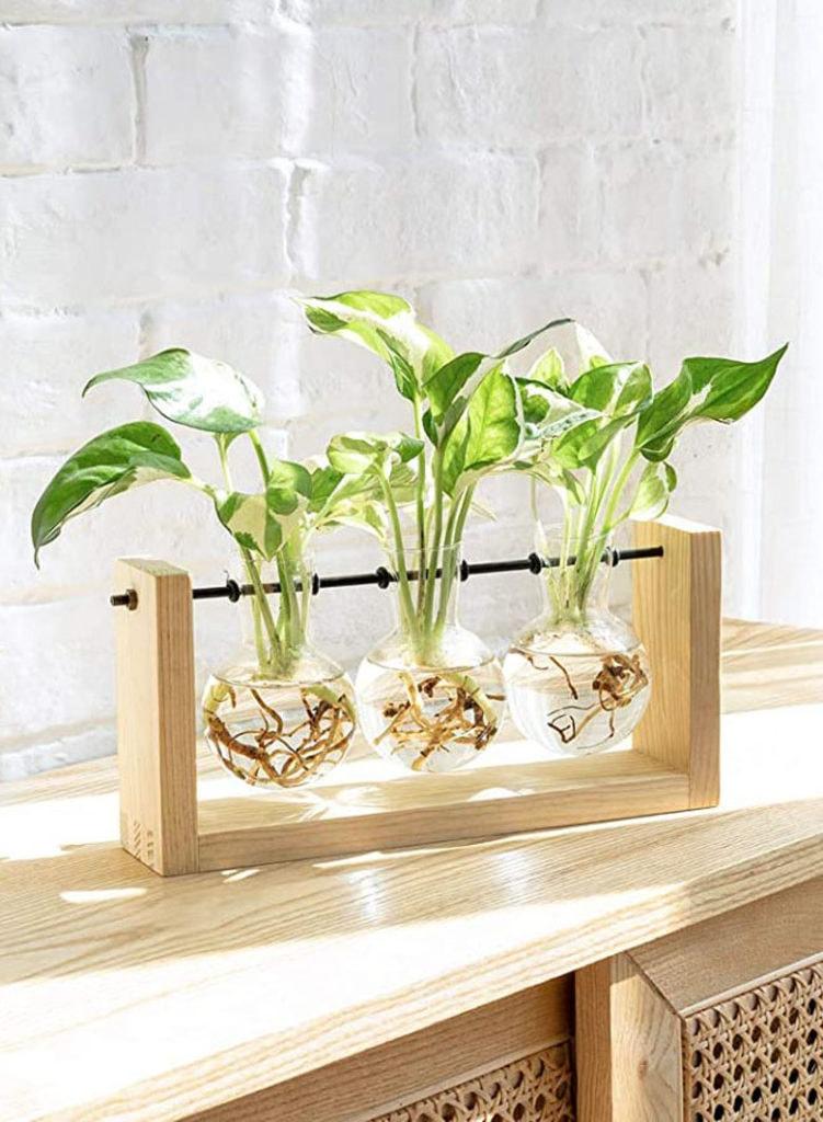 cadeau de plante d'intérieur de station de propagation pour maman