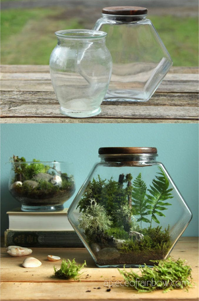 make mom a living terrarium for Mother's Day or her birthday