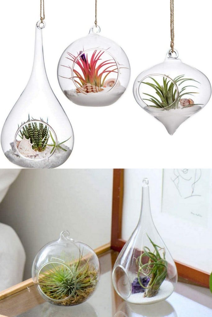 magical glass Air Plant holders