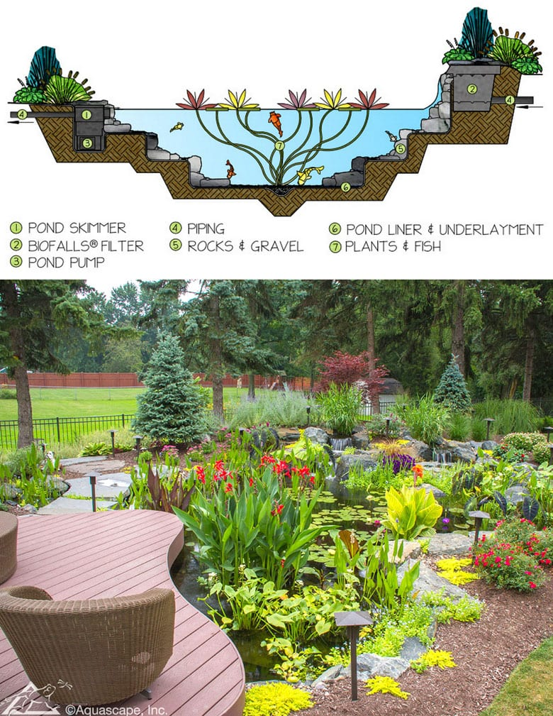 backyard small pond and waterfall plan with filter, pump, water garden plants and flowers