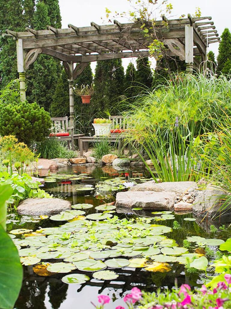 pergola and lily pond with koi fish in garden