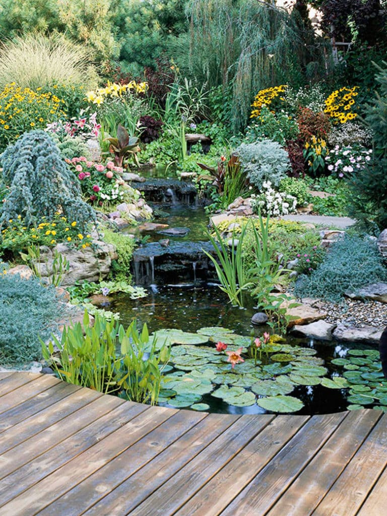A beautiful pond and small waterfall  with lots of colorful flower plants and fish