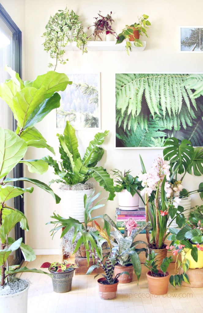 beautiful & easy care indoor plants. Best houseplants with showy foliage & flowers, plus gardening tips for low light conditions.