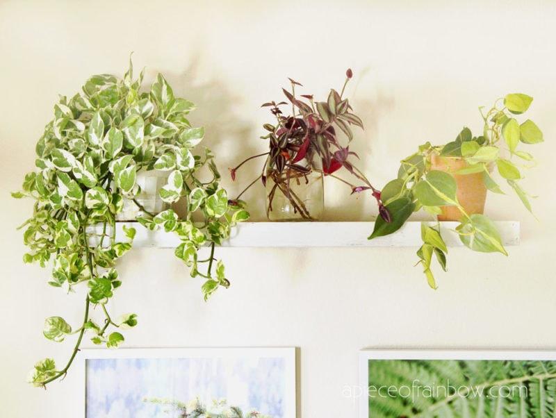 gorgeous indoor vines in living room