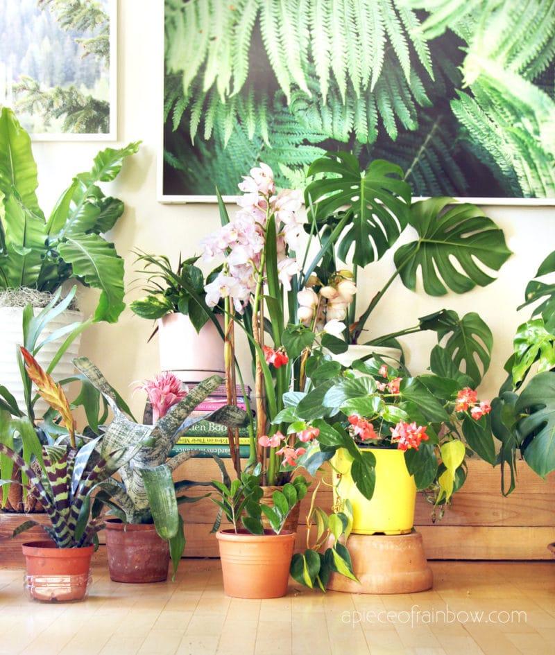 Beautiful flowering indoor plants in modern boho home