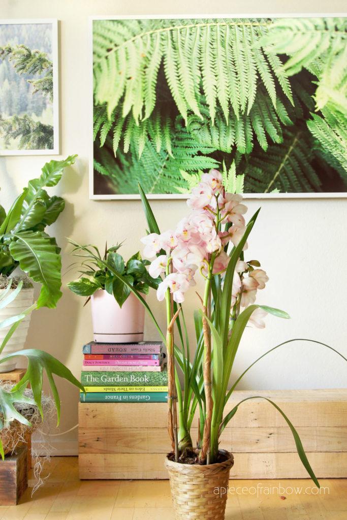 beautiful flowerin Cymbidium orchid with indoor garden plants