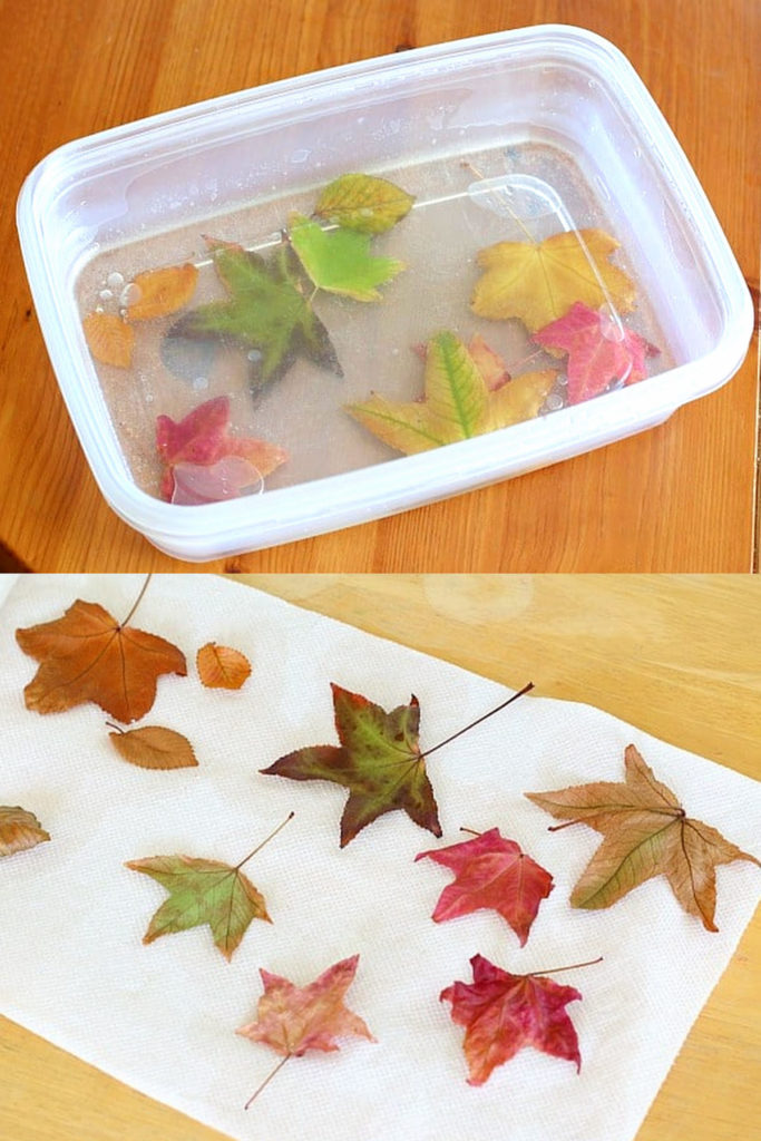 conservar las hojas de otoño en glicerina o Mod Podge