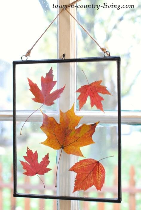 hojas de otoño prensadas en marcos de cuadros